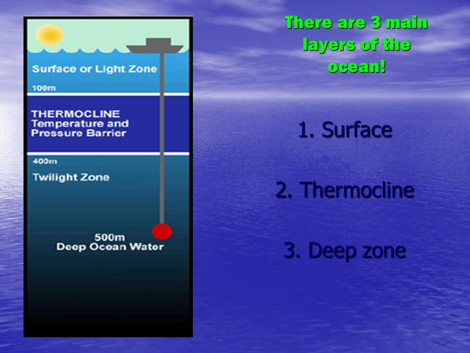 There are 3 main layers of the ocean!