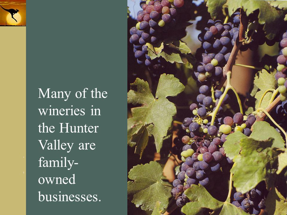 Many of the wineries in the Hunter Valley are family-owned businesses.