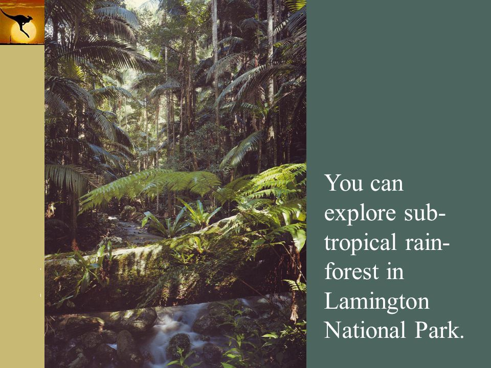 You can explore sub-tropical rain-forest in Lamington National Park.