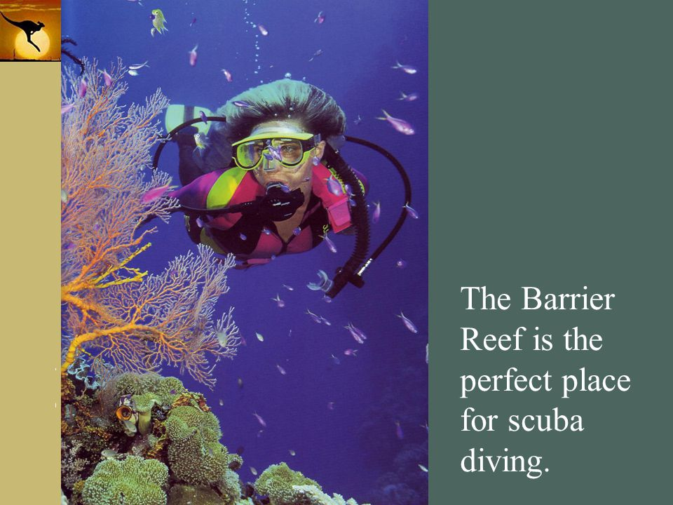 The Barrier Reef is the perfect place for scuba diving.
