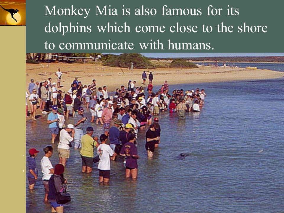 Monkey Mia is also famous for its dolphins which come close to the shore to communicate with humans.
