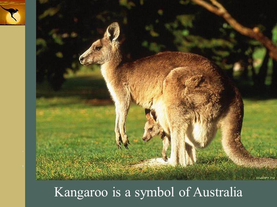 Kangaroo is a symbol of Australia