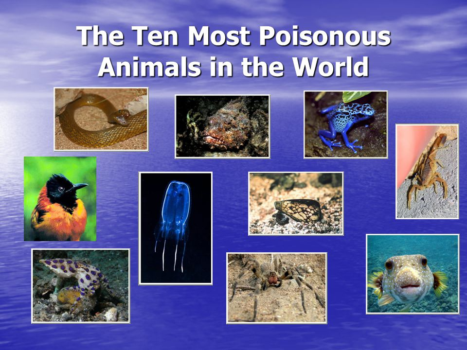 The Ten Most Poisonous Animals in the World