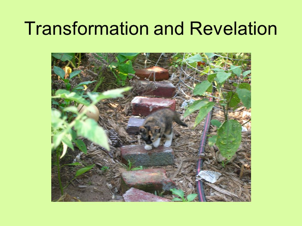 Transformation and Revelation
