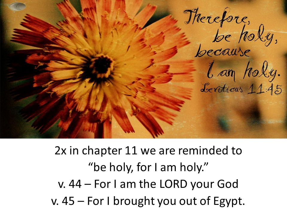 2x in chapter 11 we are reminded to be holy, for I am holy. v