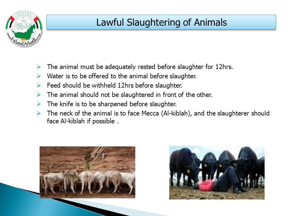 Lawful Slaughtering of Animals