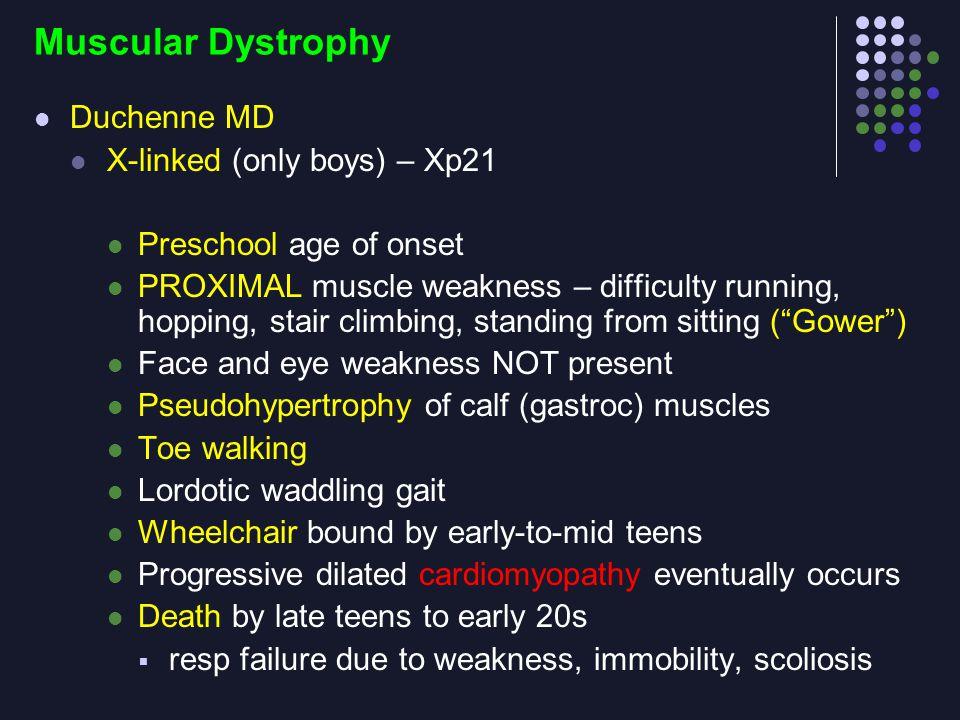 Muscular Dystrophy Duchenne MD X-linked (only boys) – Xp21