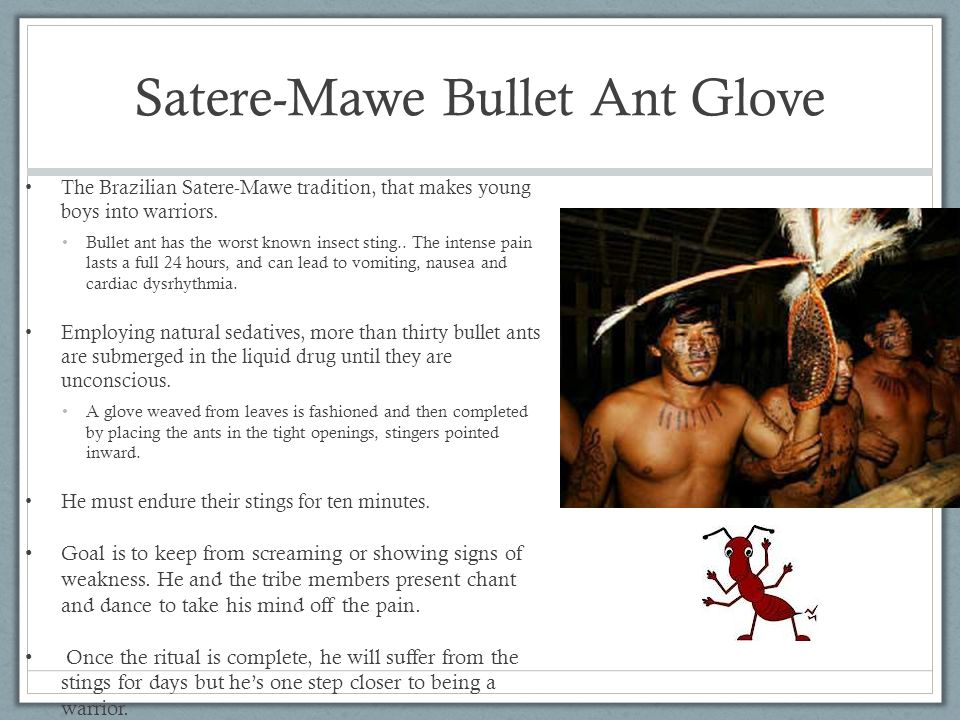 Satere-Mawe Bullet Ant Glove