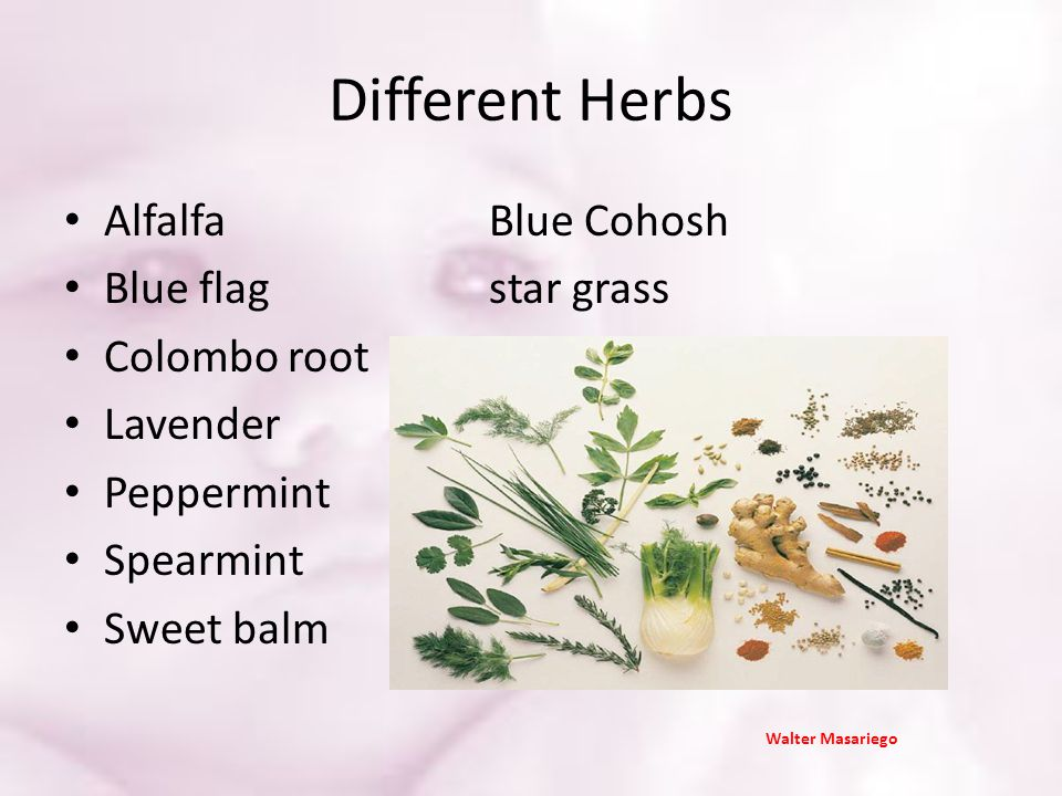 Different Herbs Alfalfa Blue Cohosh Blue flag star grass Colombo root