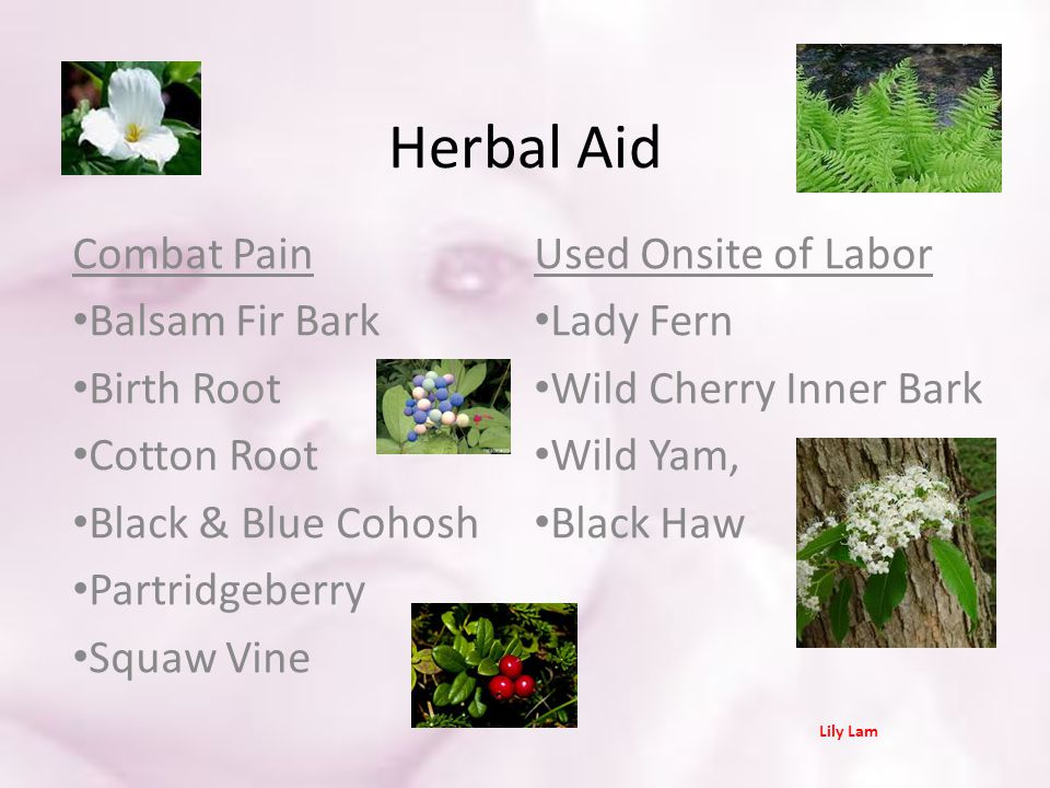 Herbal Aid Combat Pain Used Onsite of Labor Balsam Fir Bark Lady Fern