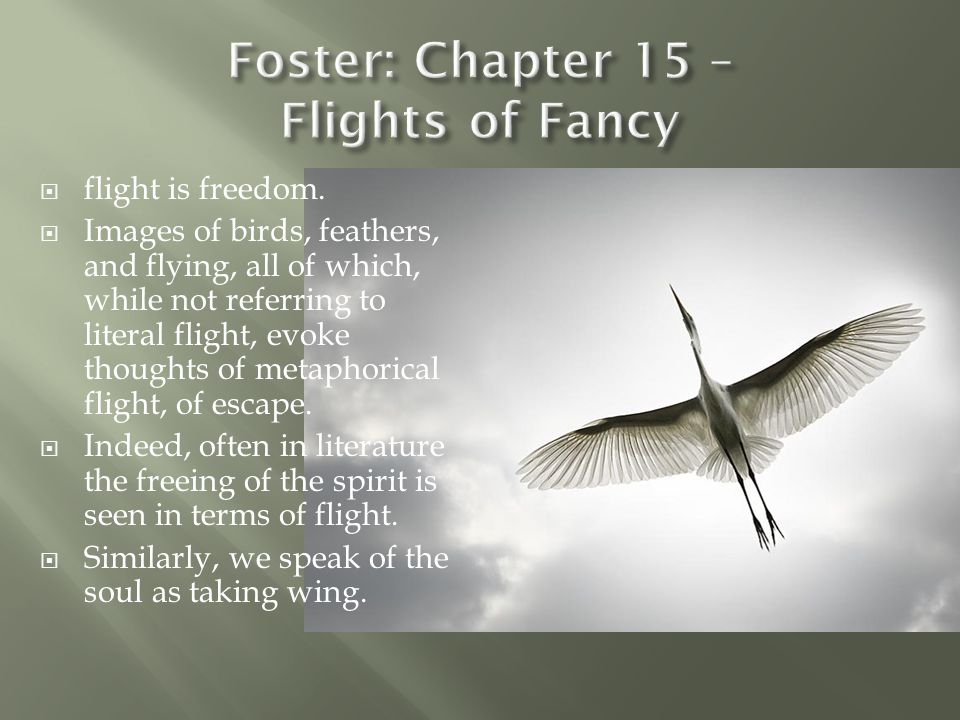 Foster: Chapter 15 – Flights of Fancy