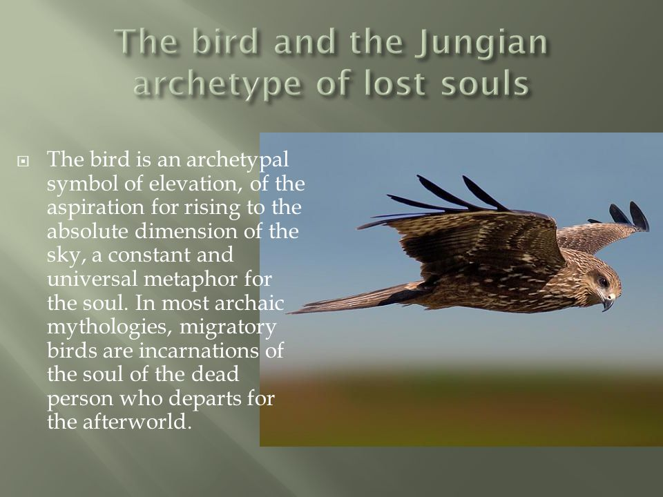 The bird and the Jungian archetype of lost souls