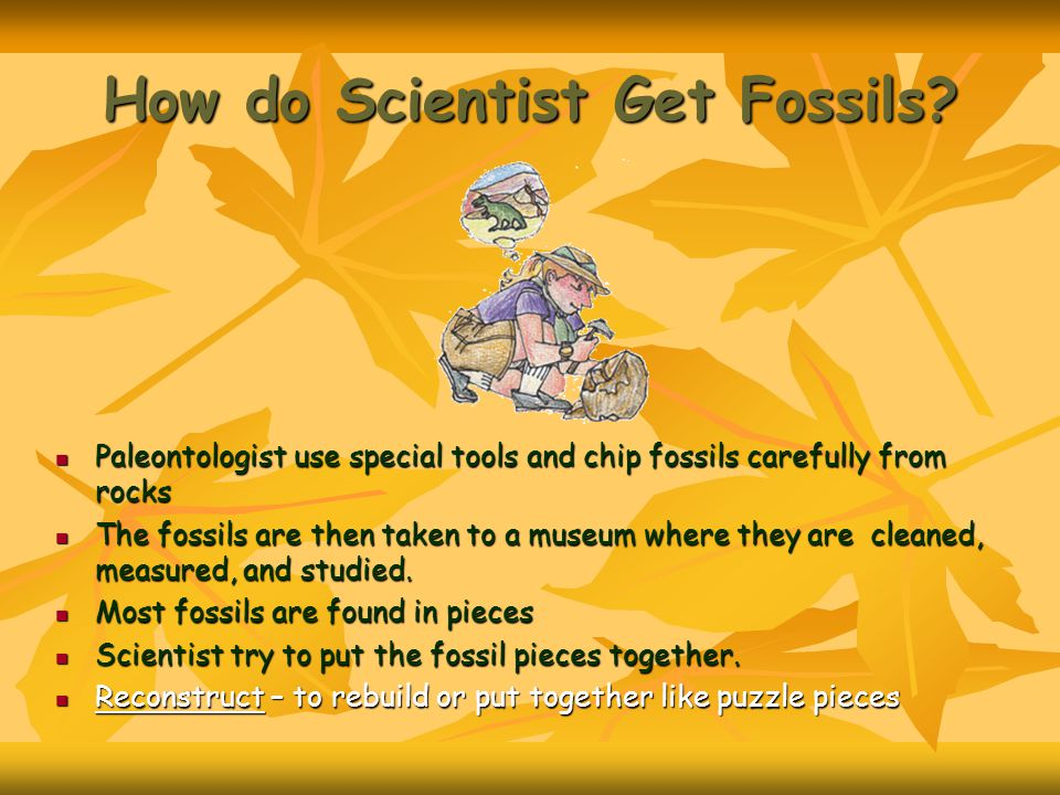 How do Scientist Get Fossils