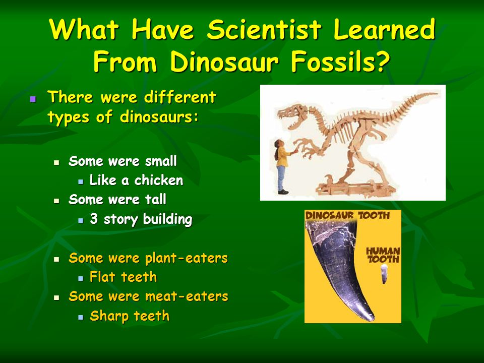 What Have Scientist Learned From Dinosaur Fossils