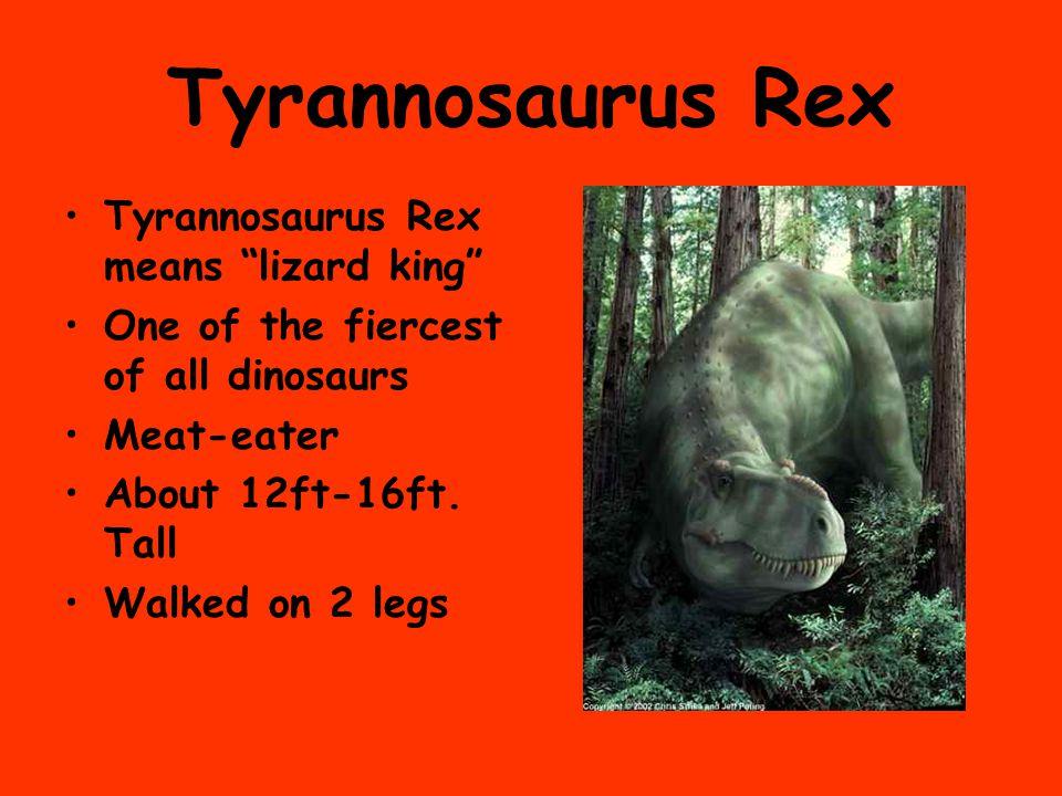 Tyrannosaurus Rex Tyrannosaurus Rex means lizard king