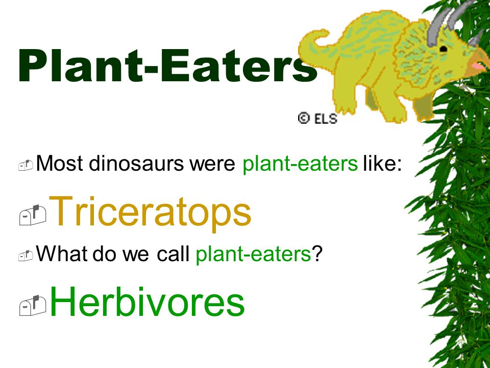Plant-Eaters Triceratops Herbivores