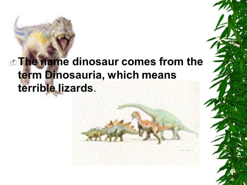 The name dinosaur comes from the term Dinosauria, which means terrible lizards.