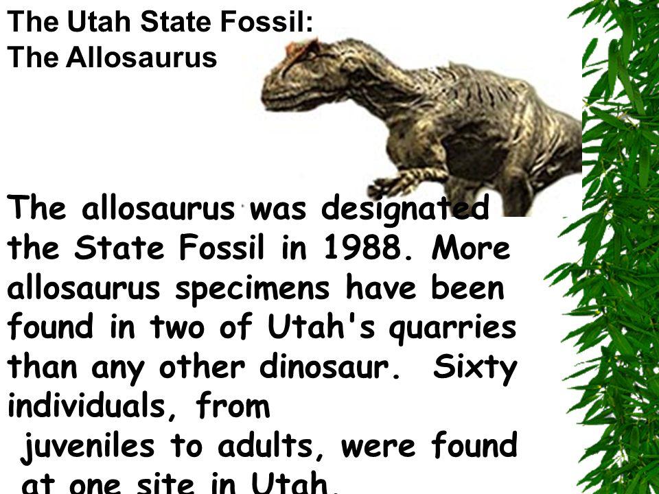 The allosaurus was designated