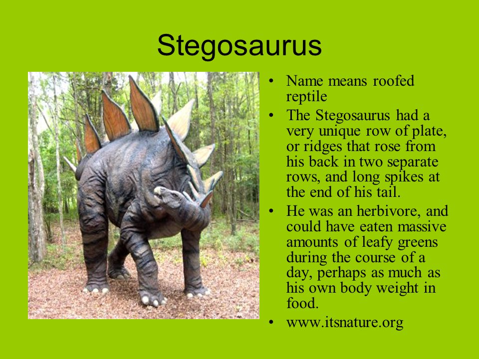 Stegosaurus Name means roofed reptile