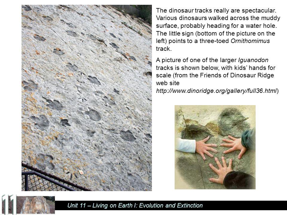 The dinosaur tracks really are spectacular