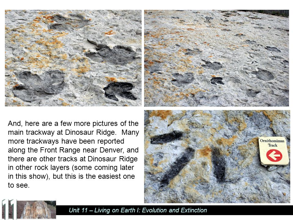 And, here are a few more pictures of the main trackway at Dinosaur Ridge.