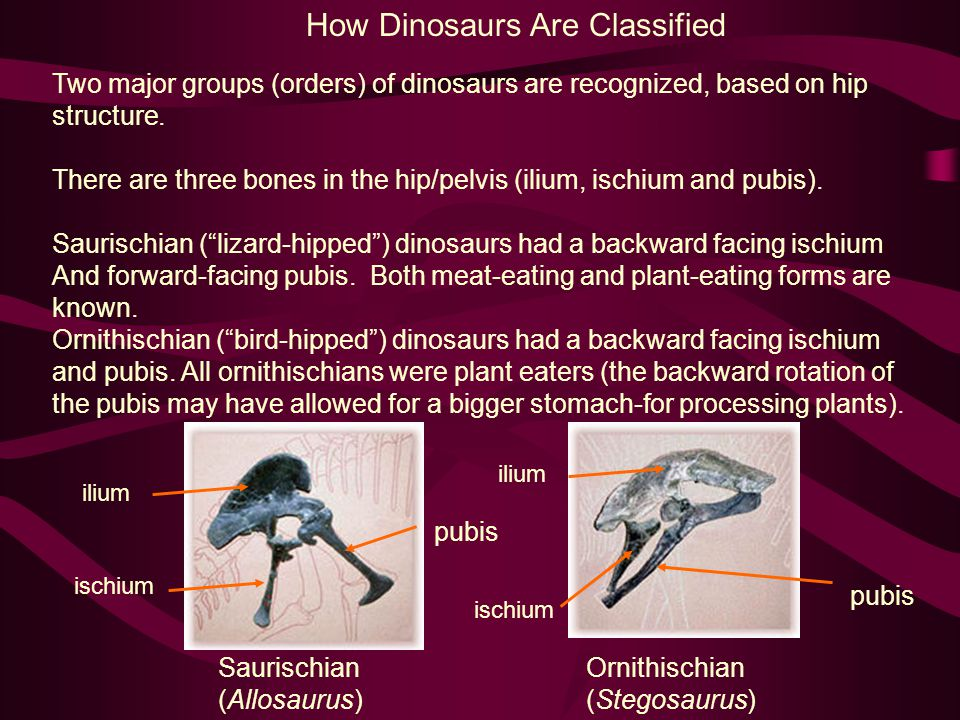 How Dinosaurs Are Classified