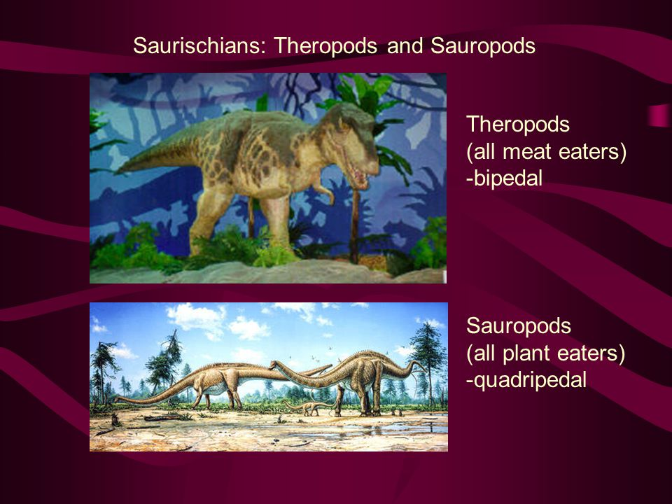 Saurischians: Theropods and Sauropods