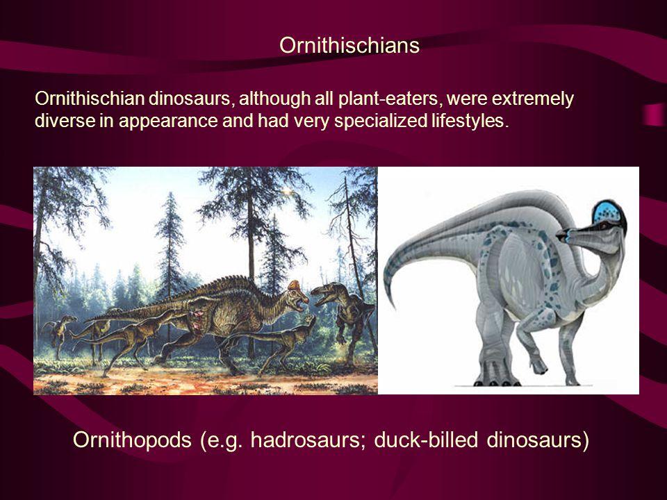 Ornithopods (e.g. hadrosaurs; duck-billed dinosaurs)