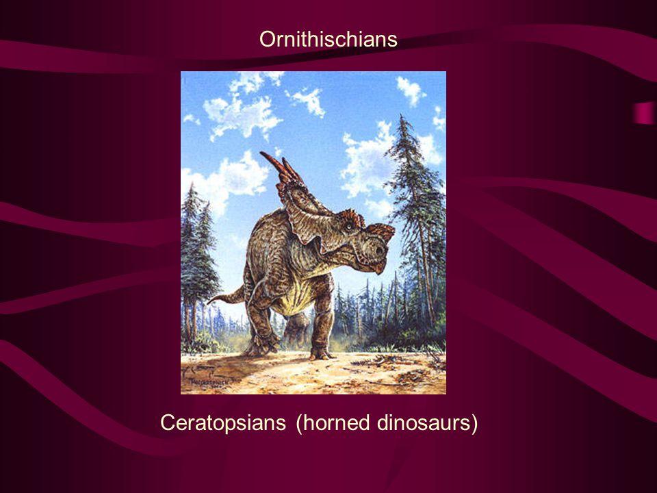 Ornithischians Ceratopsians (horned dinosaurs)