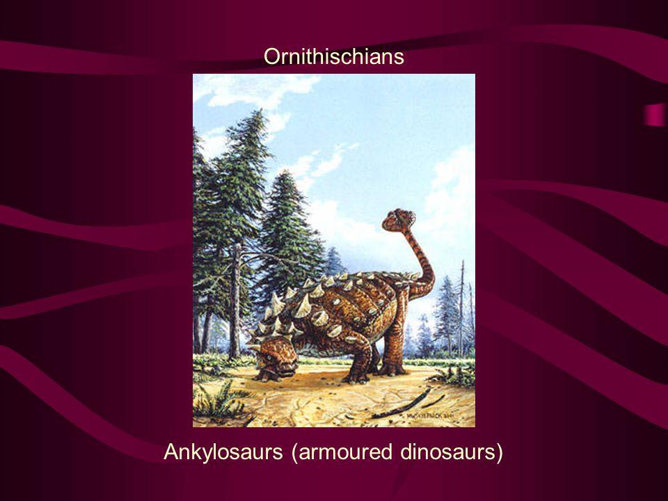 Ornithischians Ankylosaurs (armoured dinosaurs)