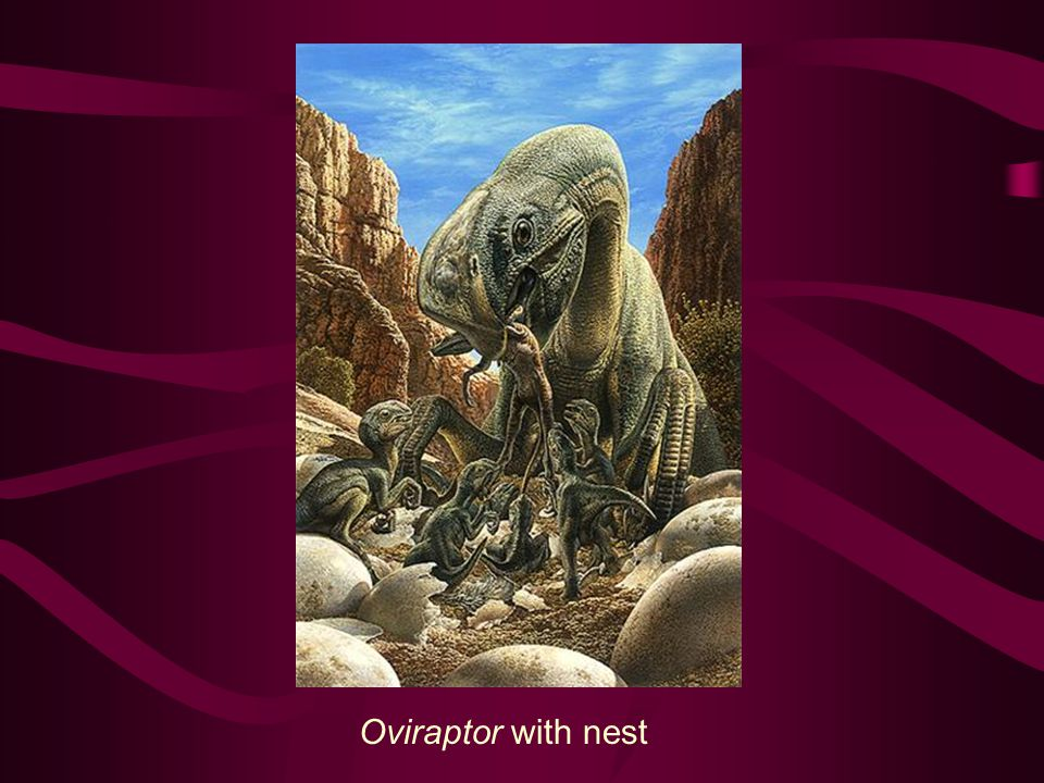 Oviraptor with nest