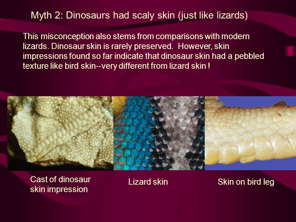 Myth 2: Dinosaurs had scaly skin (just like lizards)