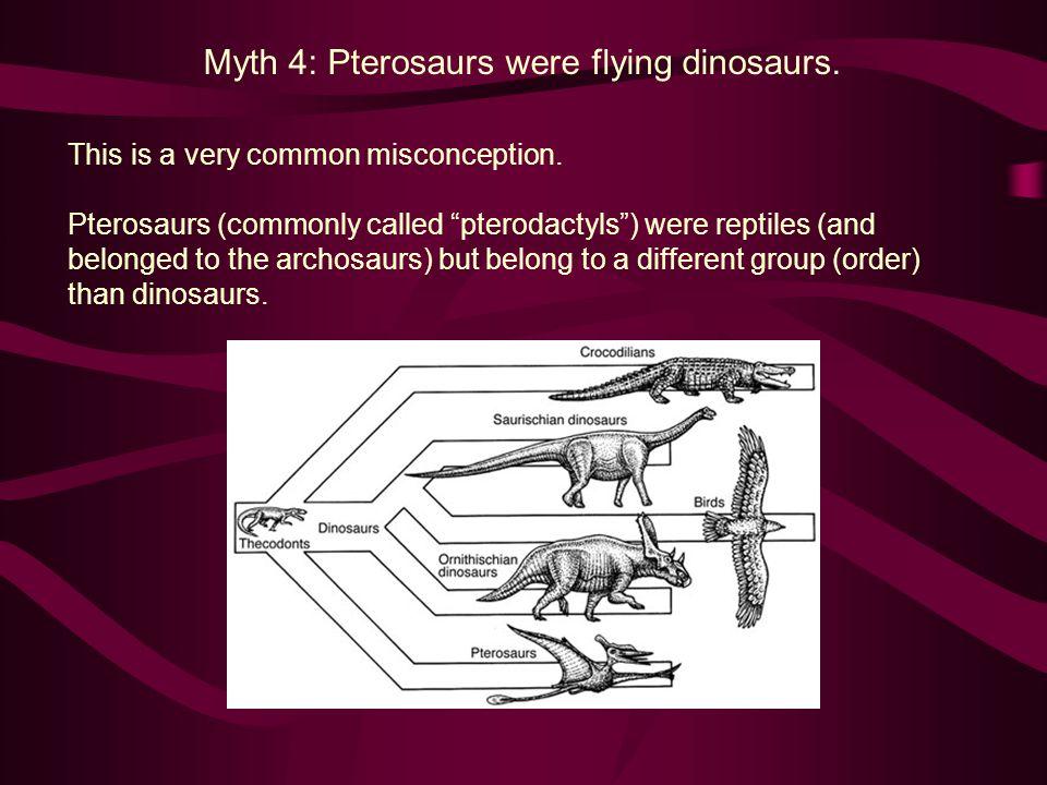 Myth 4: Pterosaurs were flying dinosaurs.