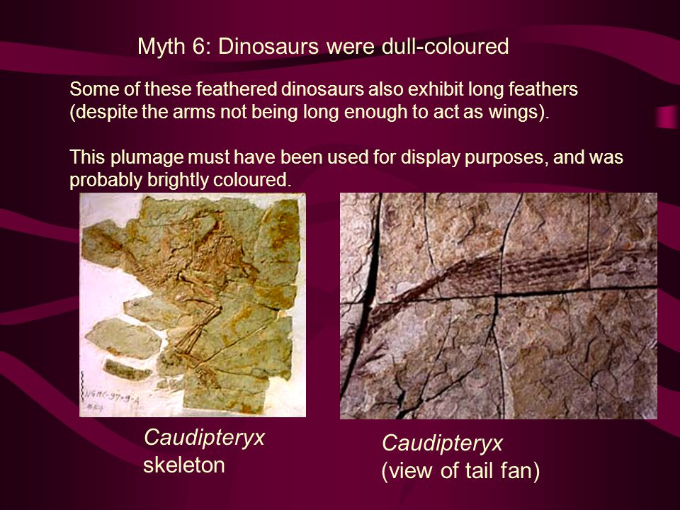 Myth 6: Dinosaurs were dull-coloured