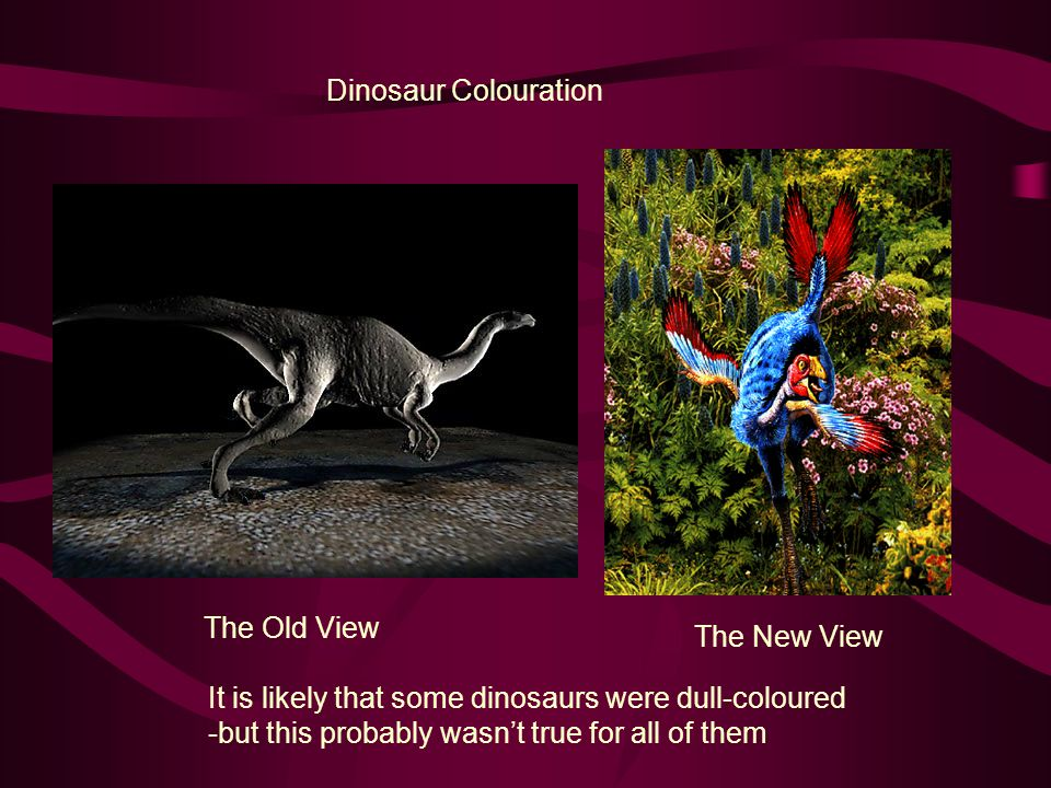 Dinosaur Colouration The Old View. The New View. It is likely that some dinosaurs were dull-coloured.