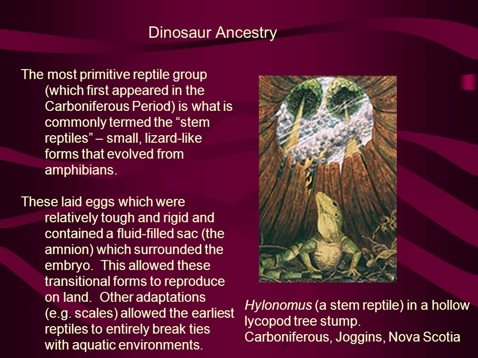 Dinosaur Ancestry