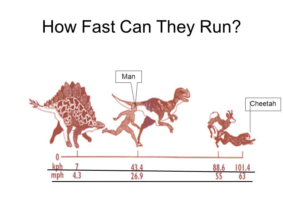 How Fast Do Cheetahs Run Dinosaur Facts....
