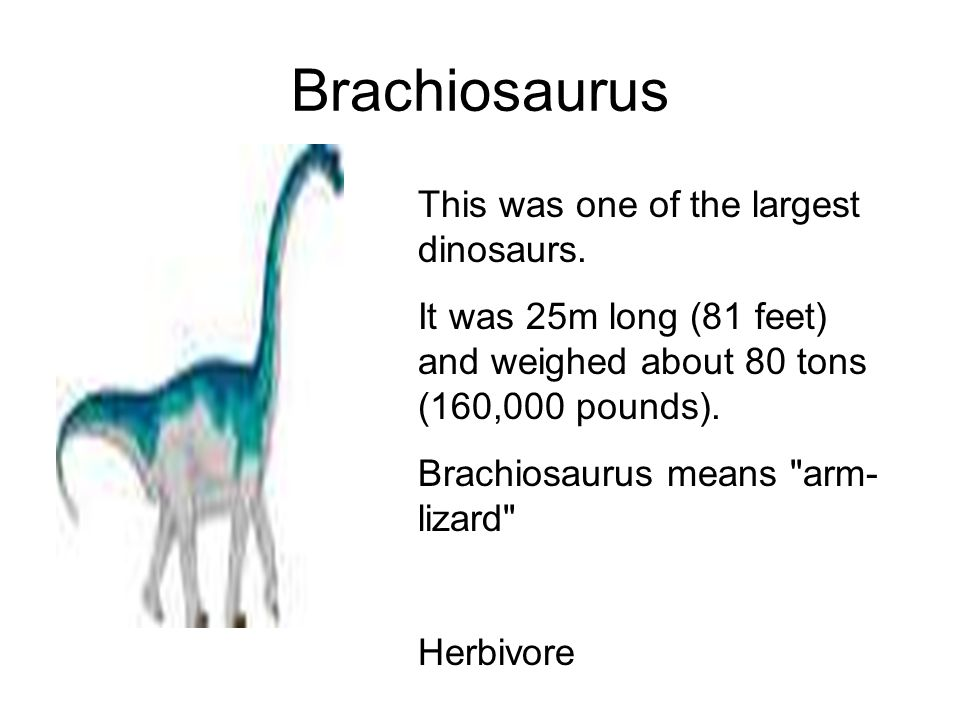 Dinosaur Facts. - ppt download