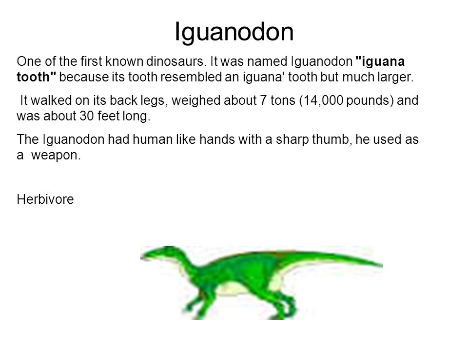 Iguanodon One of the first known dinosaurs. It was named Iguanodon iguana tooth because its tooth resembled an iguana tooth but much larger.