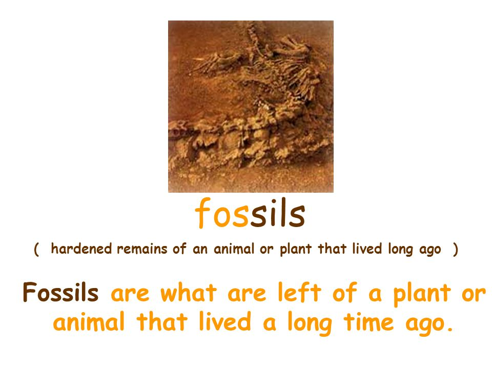 ( hardened remains of an animal or plant that lived long ago )