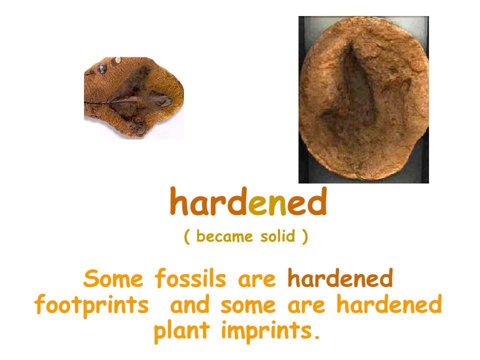 hardened ( became solid ) Some fossils are hardened footprints and some are hardened plant imprints.