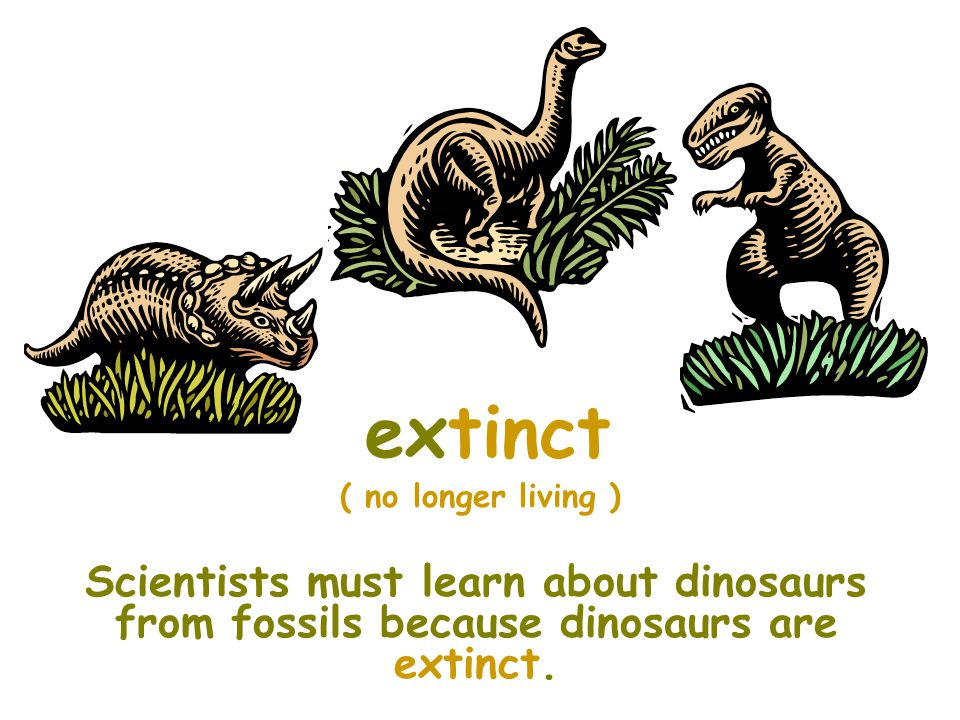 extinct ( no longer living ) Scientists must learn about dinosaurs from fossils because dinosaurs are extinct.