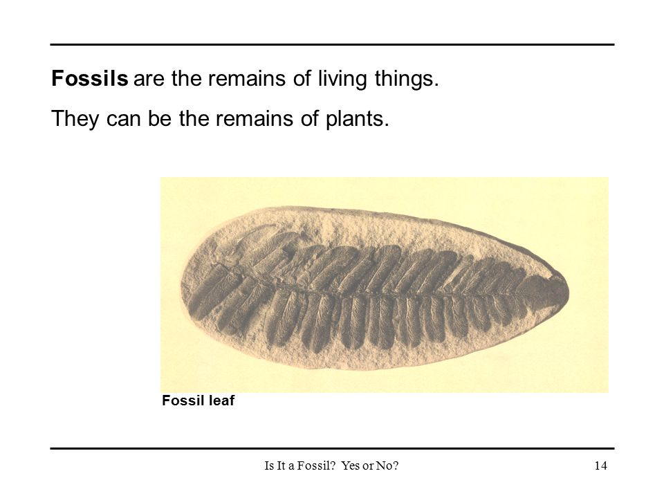 Fossils are the remains of living things.