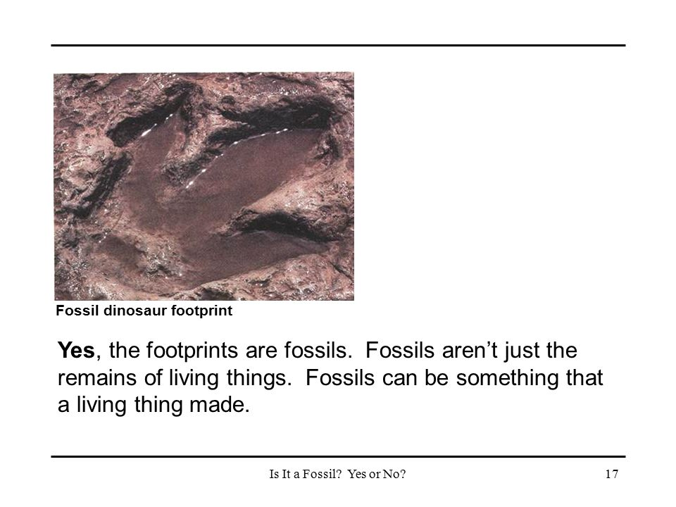 Fossil dinosaur footprint