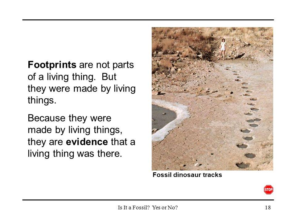 Fossil dinosaur tracks