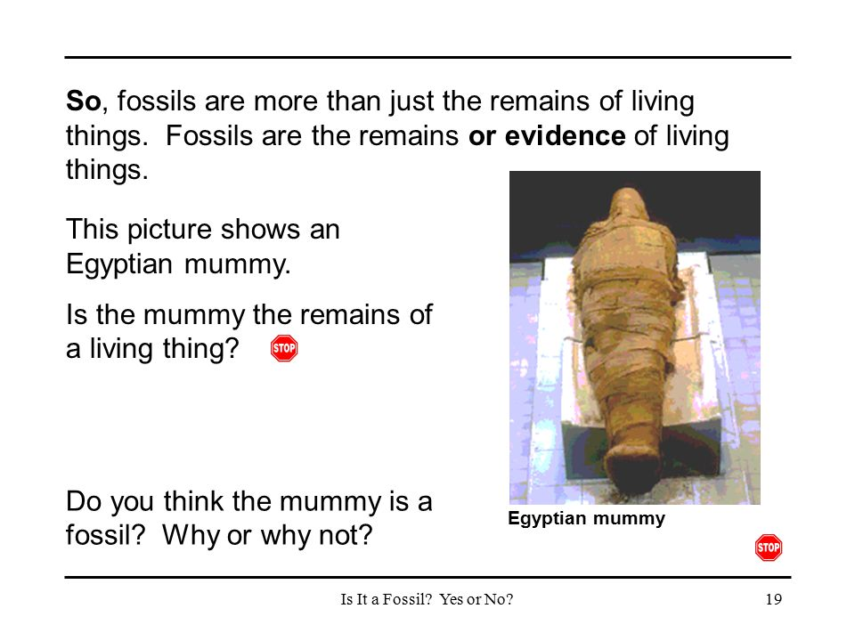 This picture shows an Egyptian mummy.