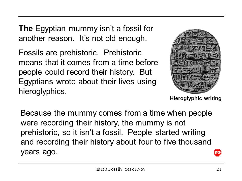 The Egyptian mummy isn't a fossil for another reason
