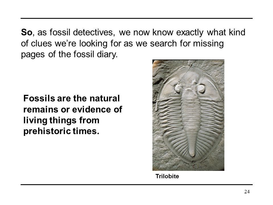 So, as fossil detectives, we now know exactly what kind of clues we're looking for as we search for missing pages of the fossil diary.