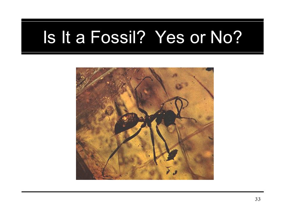 Is It a Fossil Yes or No