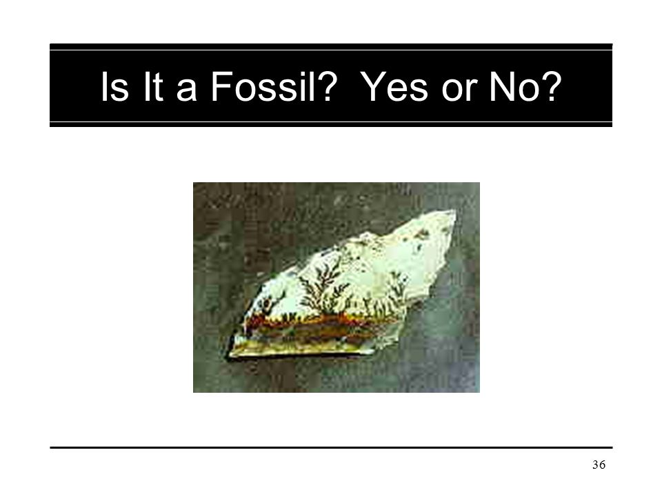 Is It a Fossil Yes or No Dendrite mineral deposit.